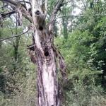 albero dei picchi