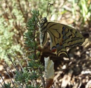farfalla appena nata