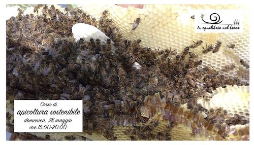 foto corso api sost piccola